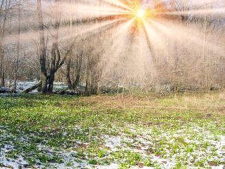 Schneeglöckchen im Februar