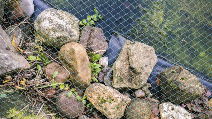Ein Laubnetz über einem Teich